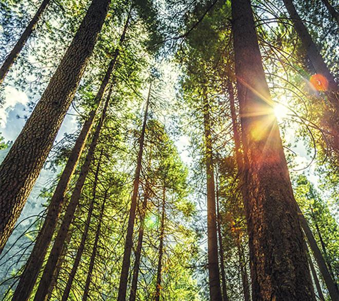 Le choix du bois